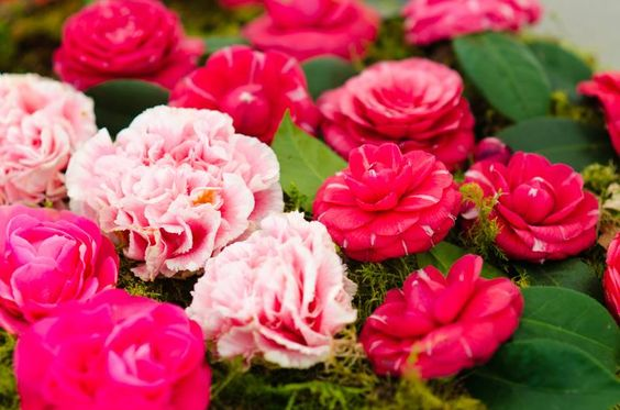https://www.facebook.com/Fragrantica.perfumes/photos/pb.171252049215.-2207520000.1422004244./10152765123159216/?type=3