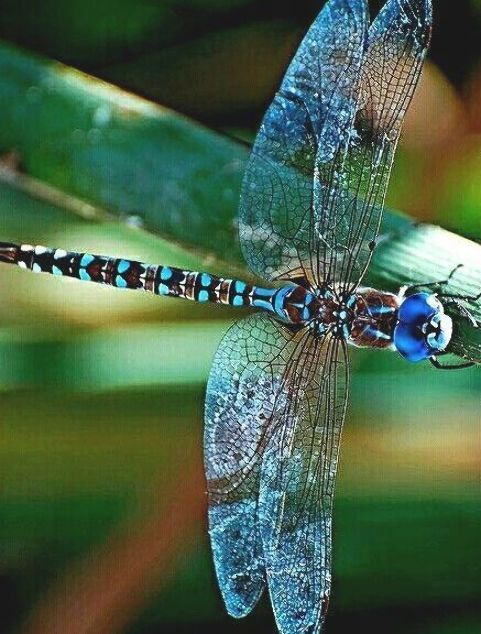 48+ Why are there so many dragonflies in my yard info