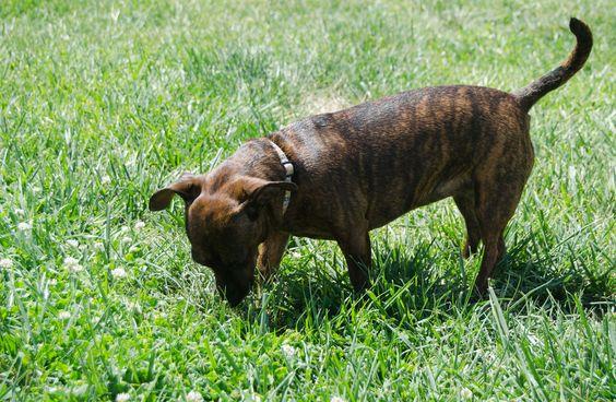 How to House Train Your Dog -- via wikiHow.com
