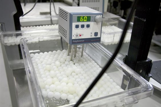 The Water Circulator  A circulator from Polyscience designed to maintain a water bath temperature to within a tenth of a degree. The ping pong balls floating on top serve as an insulator, helping the bath to maintain its temperature