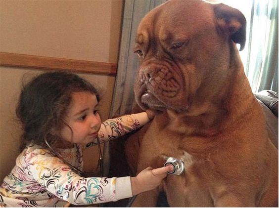 dog_kids2_0000_dog1.jpg (600×448)