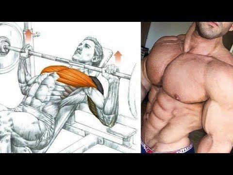 مهووس عضلات كمال الاجسام Youtube Chest Muscles Chest Workouts Muscle