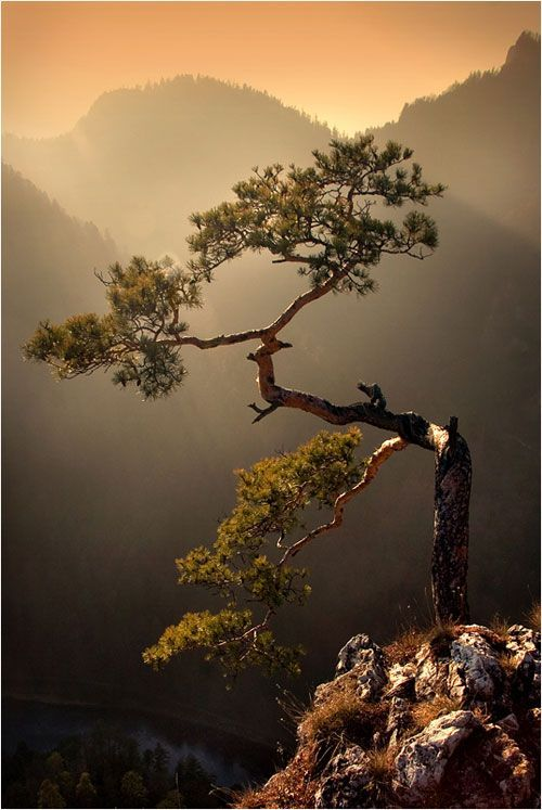 Collection Of High Quality Landscape Photography Beautiful Nature Nature Tree Landscape Photography