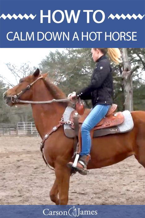If you have a horse that's high strung then you'll love this horse training tip. Learn step-by-step how to calm down a hot horse.