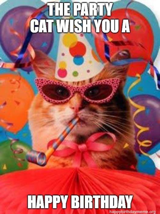 31 Funniest Cat Birthday Meme Cat Birthday Funny Happy Birthday Meme Happy Birthday Cat