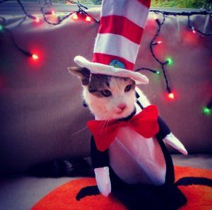 Check out these 10 ADORABLE pet costumes!