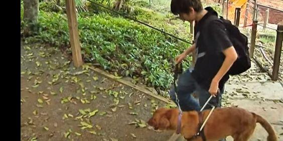 Hallie helps Zane live like a normal teenager | DoggyZoo.com