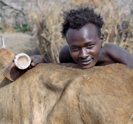 Ethiopia, Southwest Ethiopia, Omo Delta. A Dassanech youth with his ears pierced and fitted with five brass rings. He carries a traditional wooden stool, which doubles as a pillow at night. The Dassanech speak a language of Eastern Cushitic origin. They pr