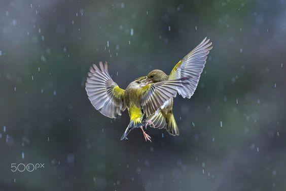 500pxなどにマルコRedaelliにより雨の中で踊ります