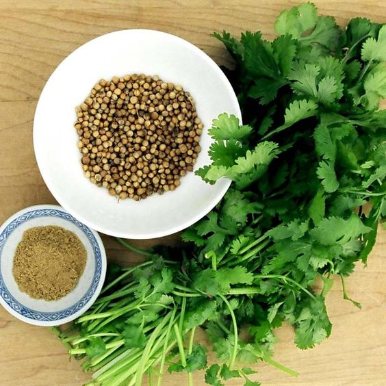 Supplier Of Coriander Natural Pure Buy OnlineCoriander oil is obtained from Coriandrum sativum of the Umbelliferae family. Also known as cor...Price: $ 22.22: