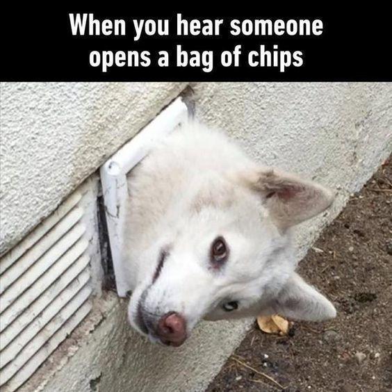 Just Checking Funny Animal Jokes Funny Dog Memes Funny Animal Memes