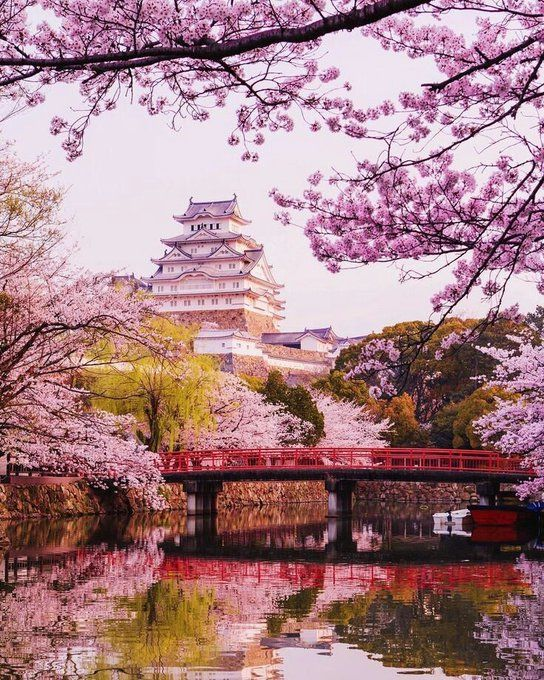 Cherry Blossoms In 2020 Cherry Blossom Wallpaper Sakura Tree Japanese Cherry Blossom