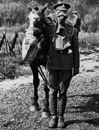 Famous Military Horses | Horses and Soldiers both were issued gas masks in World War I.