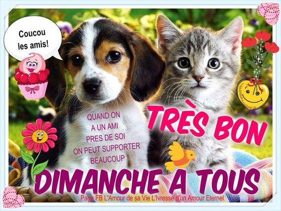 Coucou les amis! Très bon dimanche à tous Quand on a un ami pres de soi on peut supporter beaucoup #dimanche chien chat chiot chaton mignon amitie: