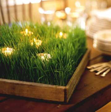 Grass centerpiece: