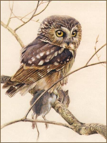 owl by Robert Bateman: