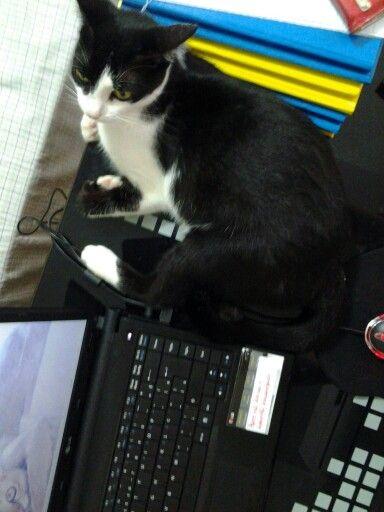 Ameixa, a gata ajudante de estudos!