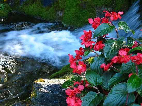 Flowers by the waterfall beautiful scenes in nature for Garden state pool scene quote