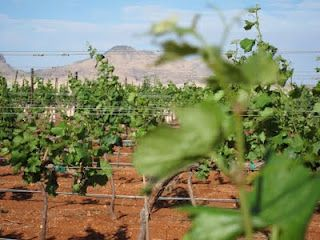 Arizona wine business and small town Arizona heading for success or a clash?