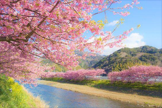 Cherry Blossoms In Tokyo Japan Japan Photography Visit Japan Cherry Blossom Season