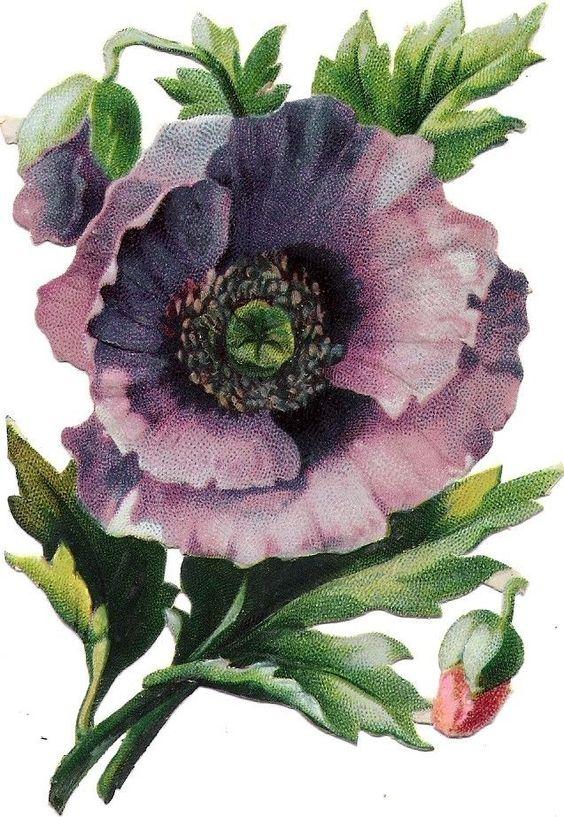 Oblaten Glanzbild scrap die cut chromo Blume  13,5cm  flower fleur: