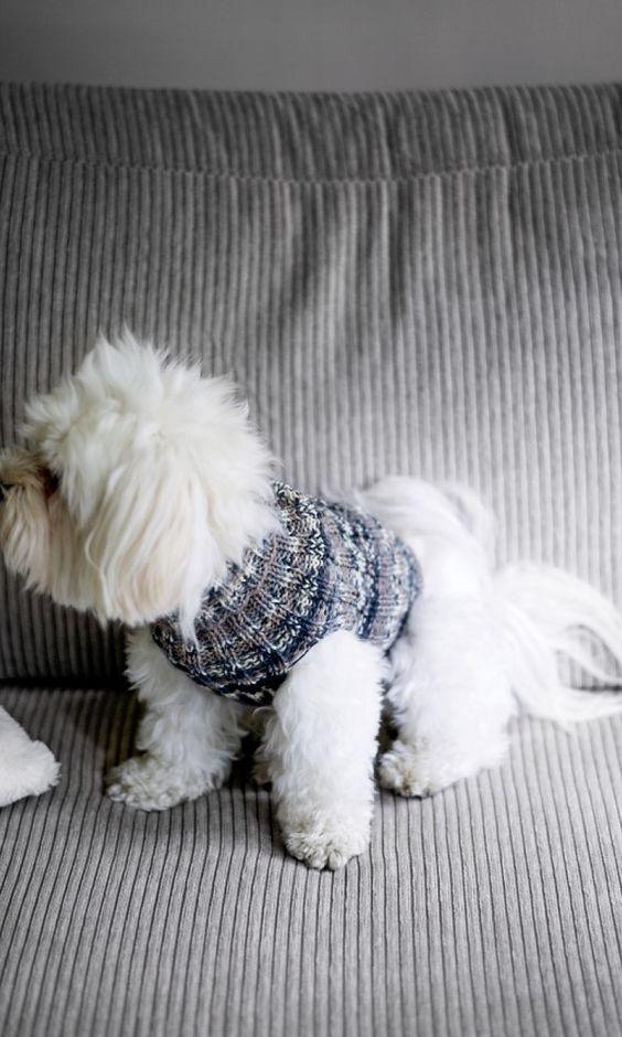 Koiran Villapaita Heijastava Neule Pitaa Lemmikkisi Lampimana Tuulissa Ja Tyrskyissa With Images Koiran Vaatteita Koira Neuleet