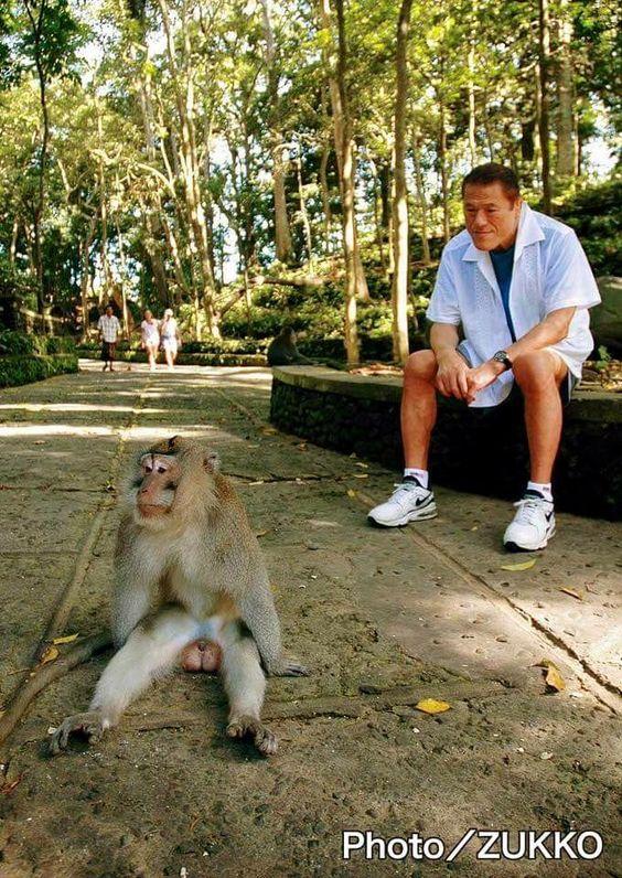 サルを見つめているアントニオ猪木