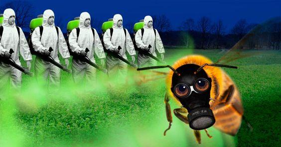 Die Regierung will Pestizide auf Schutzflächen zulassen. Unterzeichne jetzt den Appell für ein Verbot!
