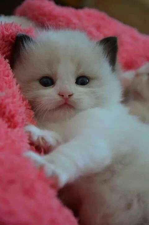 Pin By Mona Moni On Gatti In 2020 Kittens Cutest Baby Cats