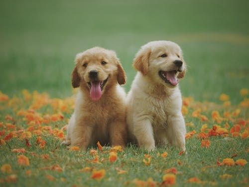 Pin On Top Fascinating Dog Breeds