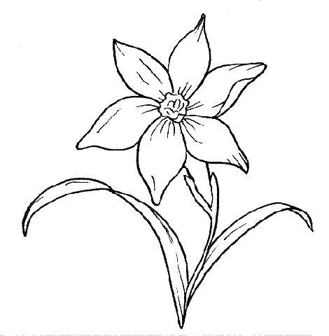 Disegno grafico del fiore narciso..,