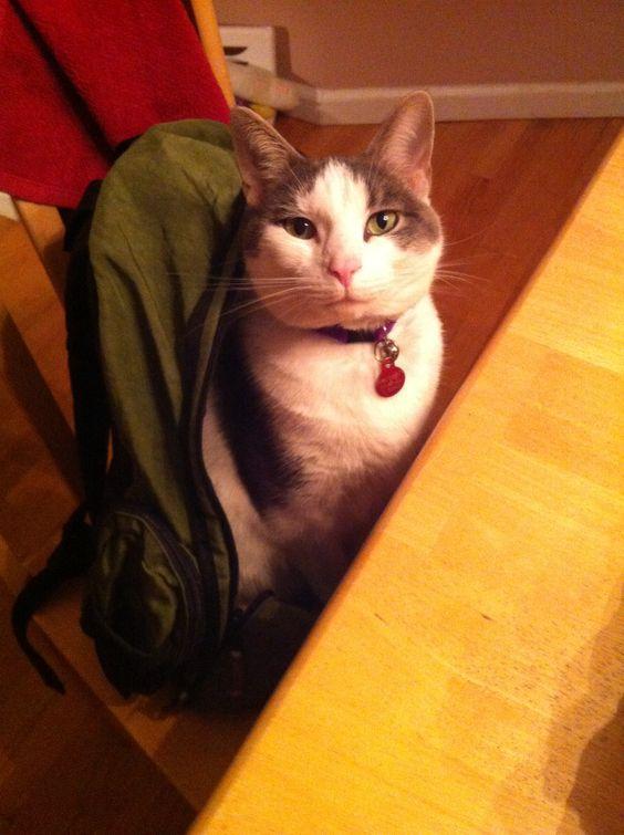 I'm ready to go to skool, mom!