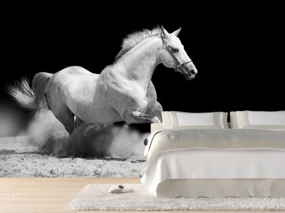 Carta da parati con foto di un cavallo bianco. Personalizza anche tu l'arredamento di casa tua. Direttamente online e con le foto del tuo animale preferito!