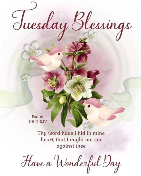 180 Tuesday Blessings Images Photos Quotes Gif Pics In 2020 Tuesday Greetings Blessed Good Morning Friends Images