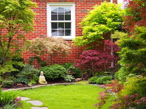 same yard, layered Japanese maples | Japanese maples ...