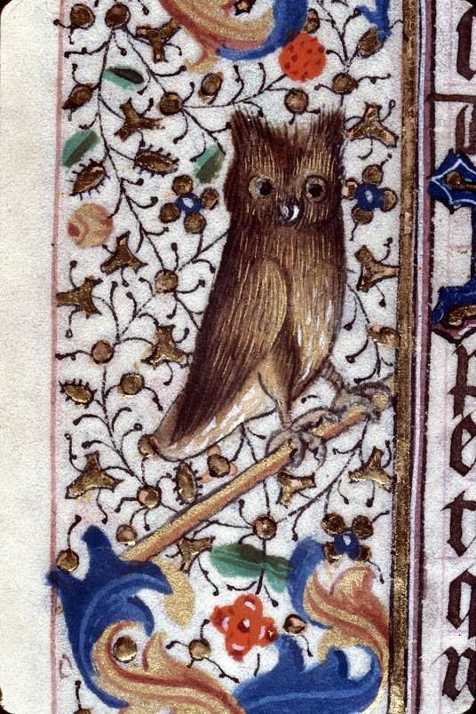 Probably a great horned owl perches on a branch in the margins of this Book of Hours created in Savoy, France, in the 15th century. Clermont-Ferrand, Bibliothèque Municipale, Ms. 84, fol. 17v.: