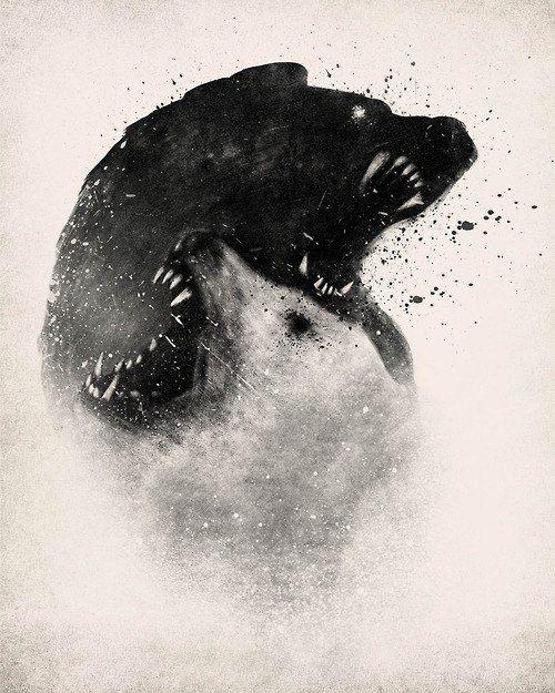 Image result for yin yang bear