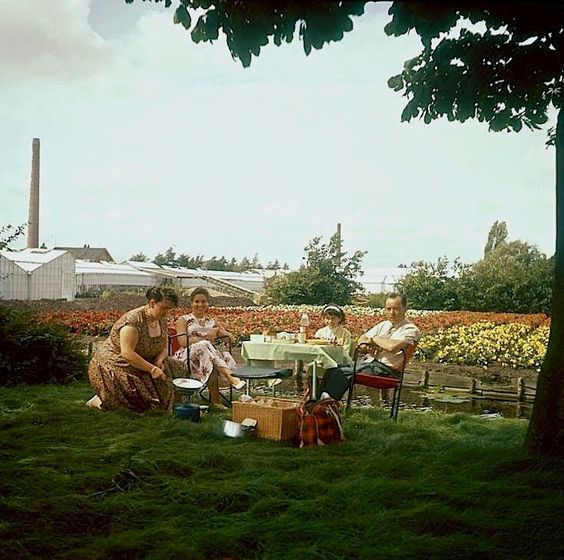 Having a picnic near the tulip bulb fields of Aalsmeer, the Netherlands, 1960, via Collectie SPAARNESTAD, Nationaal Archief Commons on flickr. The largest flower auction in the world is in Aalsmeer…: