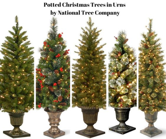 Potted Christmas Trees in Urns by National Tree Company