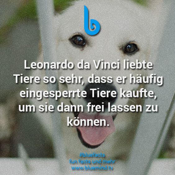 #bluefacts #fakten #wissen #unnütz #fakt #unglaublich #zitat #quote