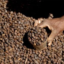 The Many Lives of Leftover Coffee | Slow Food International - Good, Clean and Fair food.