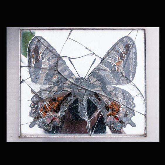 https://flic.kr/p/t9E15y   Butterfly June 2011 #butterfly #color