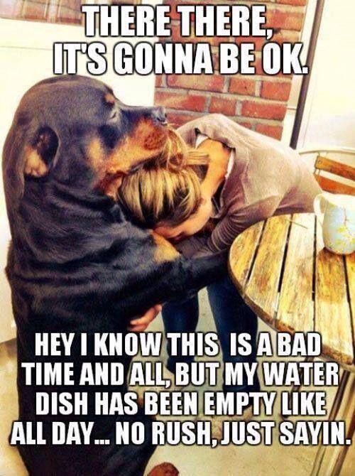 Funny. Good one dog