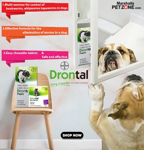 Want To Protect Your Pet From Worms Try Bayer Drontal Plus Deworming Tablets Syrup Puppy Safe Worms In Dogs Tapeworms In Dogs