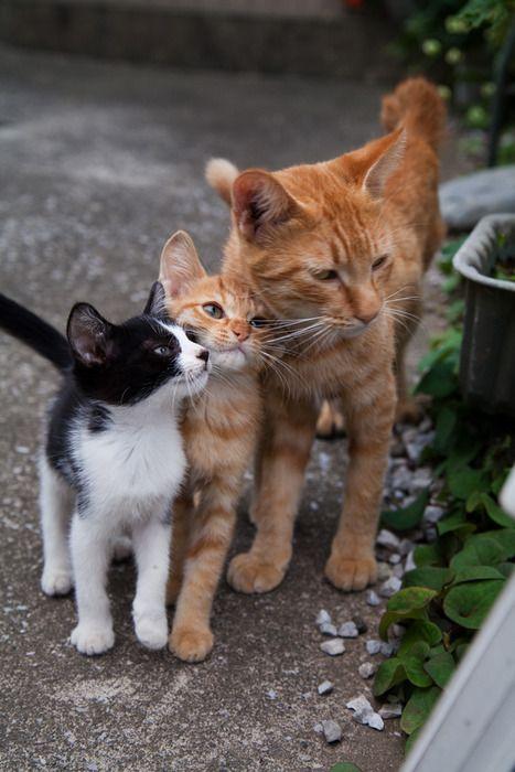 Cat family on a walk around the garden