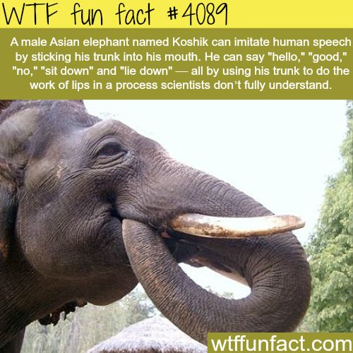 Asian Fun Facts 26
