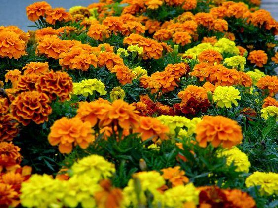 Tita Carré Agulha e Tricot : Square Canteiro de flores em crochet