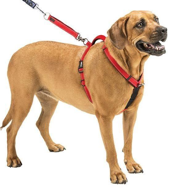 Best Dog Harness For Running In 2020 Pembroke Welsh Corgi Dog