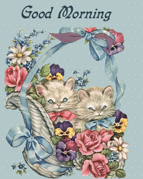 Cute good morning sms, Cat costumes and Kittens on Pinterest