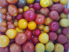 Tomatoes grown in the Heartland Harvest Garden